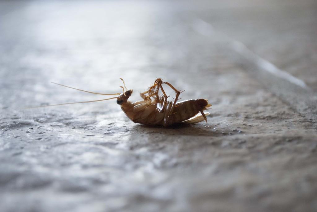 Что нужно знать об уничтожении тараканов